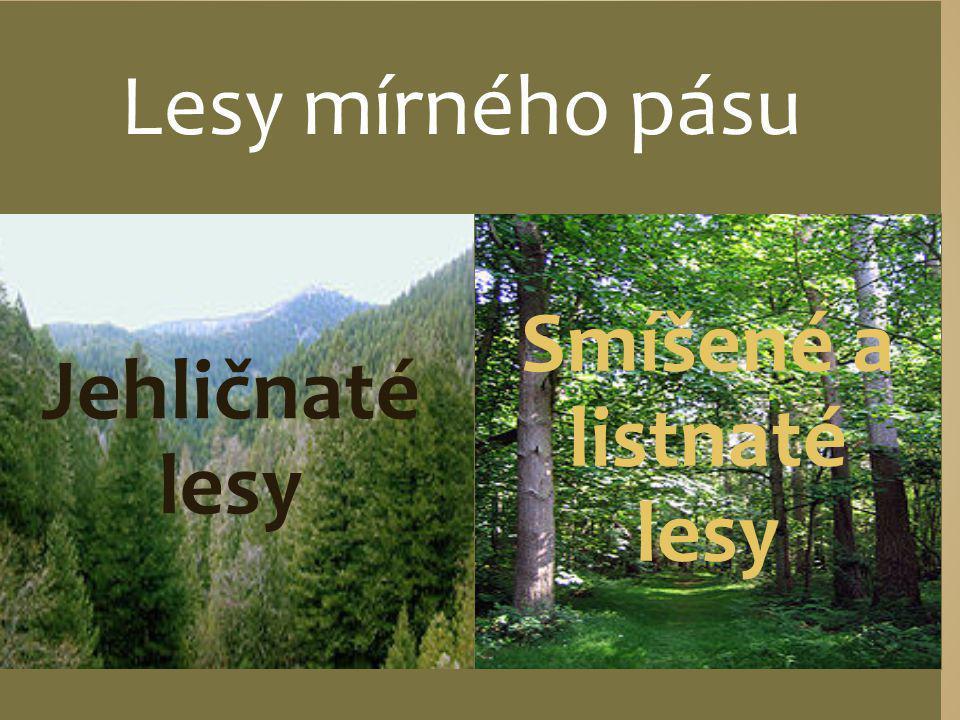 Smíšené a listnaté lesy