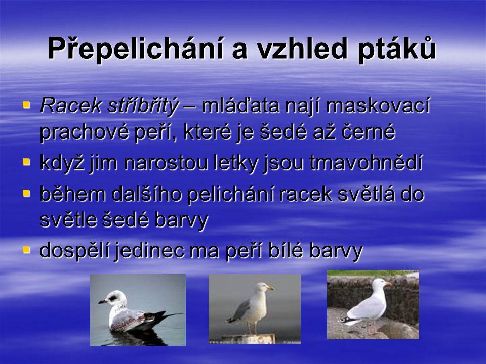 Přepelichání a vzhled ptáků