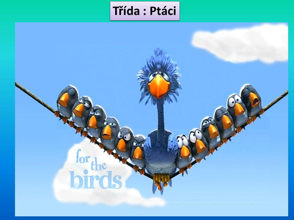 Třída : Ptáci
