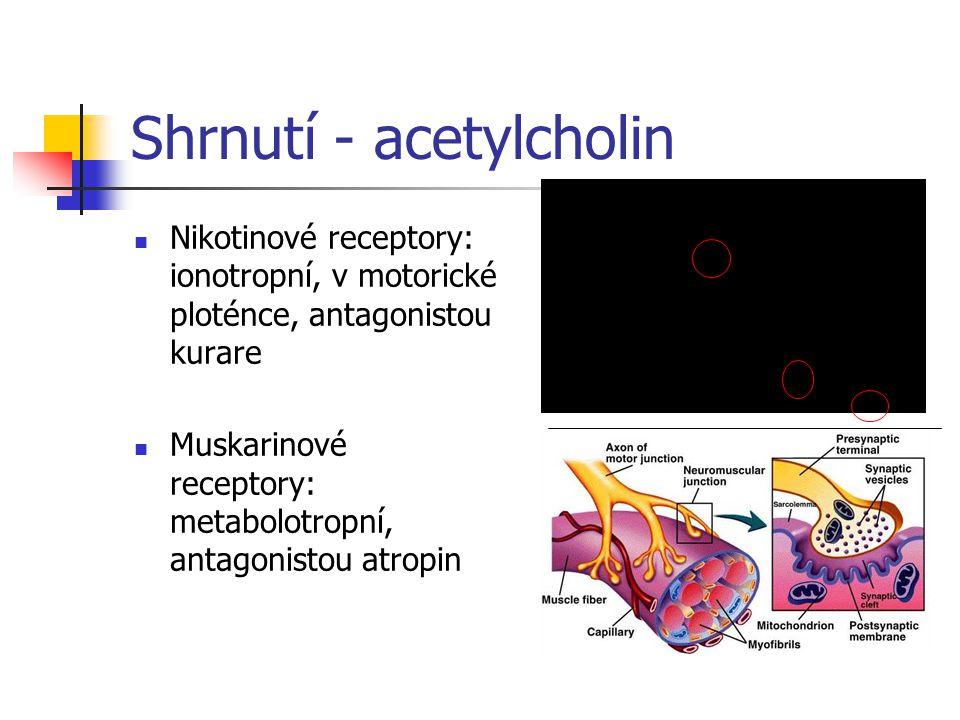 Shrnutí - acetylcholin