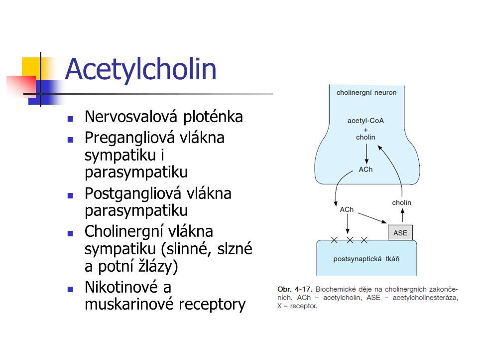Acetylcholin Nervosvalová ploténka