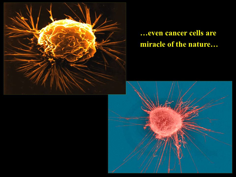 …even cancer cells are miracle of the nature…