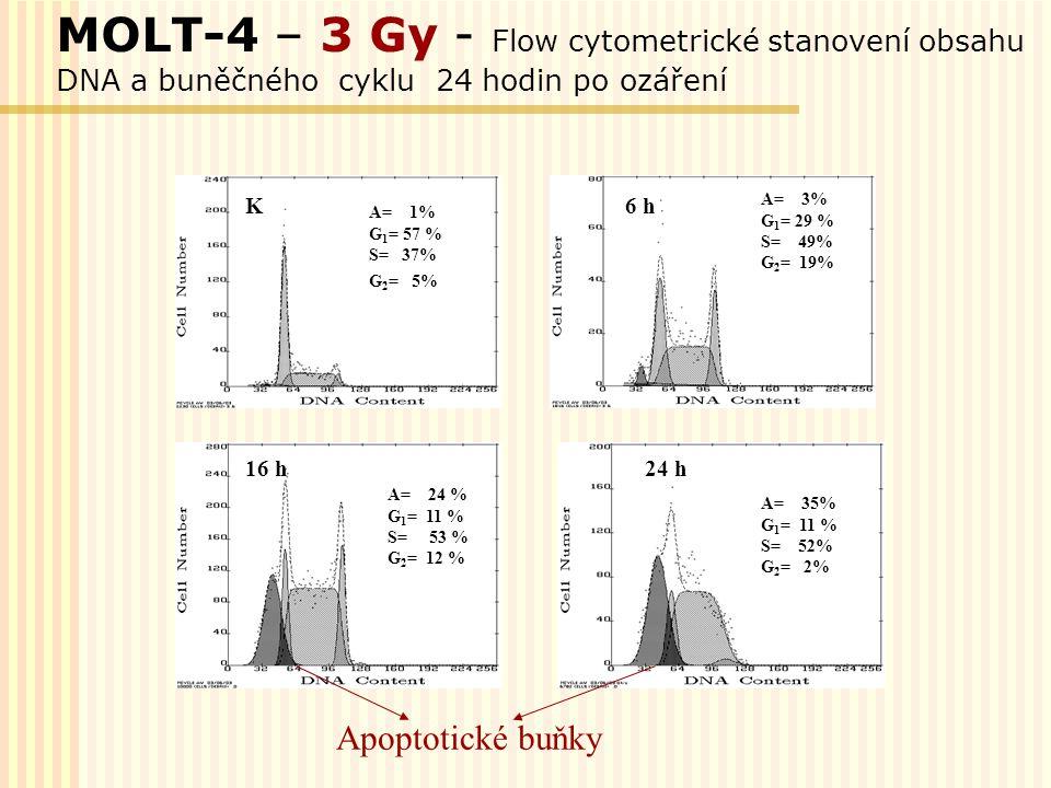 MOLT-4 – 3 Gy - Flow cytometrické stanovení obsahu DNA a buněčného cyklu 24 hodin po ozáření