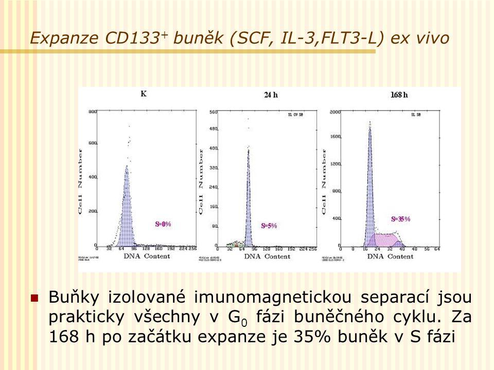 Expanze CD133+ buněk (SCF, IL-3,FLT3-L) ex vivo