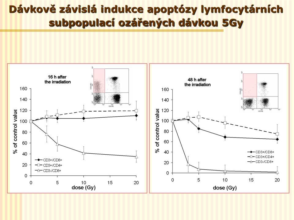 Dávkově závislá indukce apoptózy lymfocytárních subpopulací ozářených dávkou 5Gy