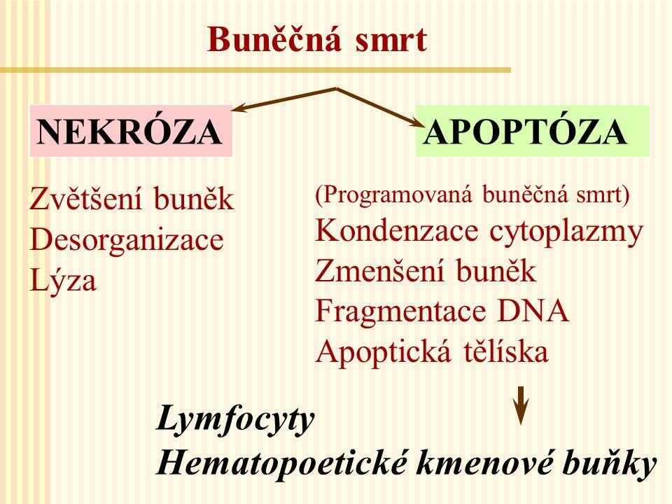 Hematopoetické kmenové buňky