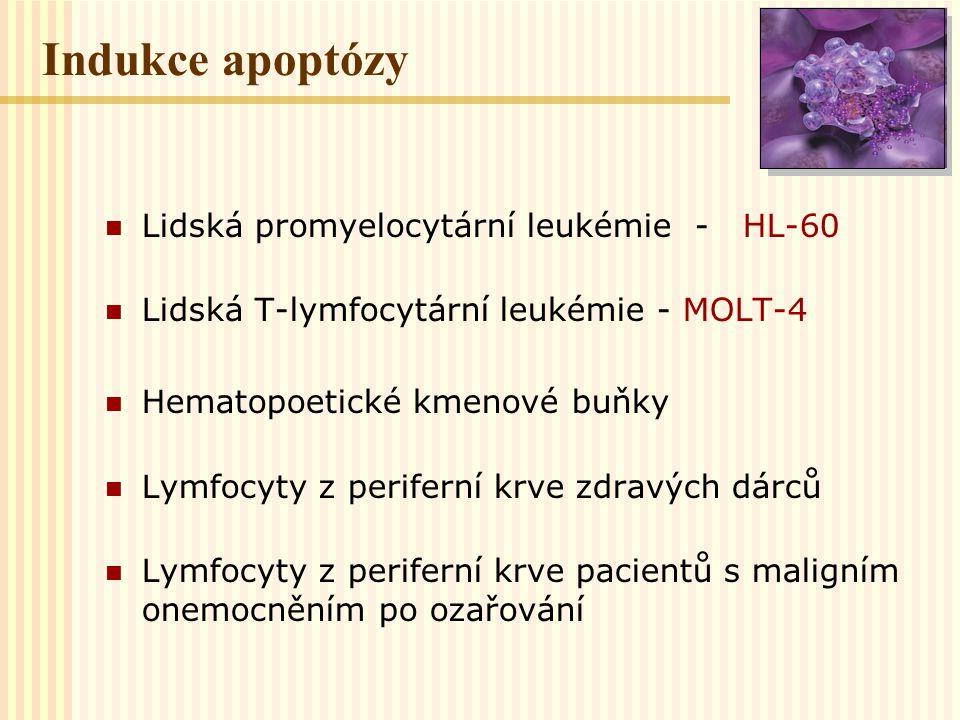 Indukce apoptózy Lidská promyelocytární leukémie - HL-60