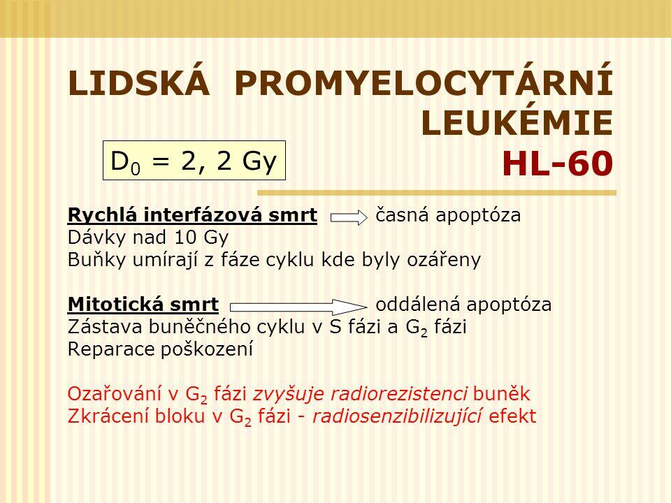 LIDSKÁ PROMYELOCYTÁRNÍ LEUKÉMIE HL-60