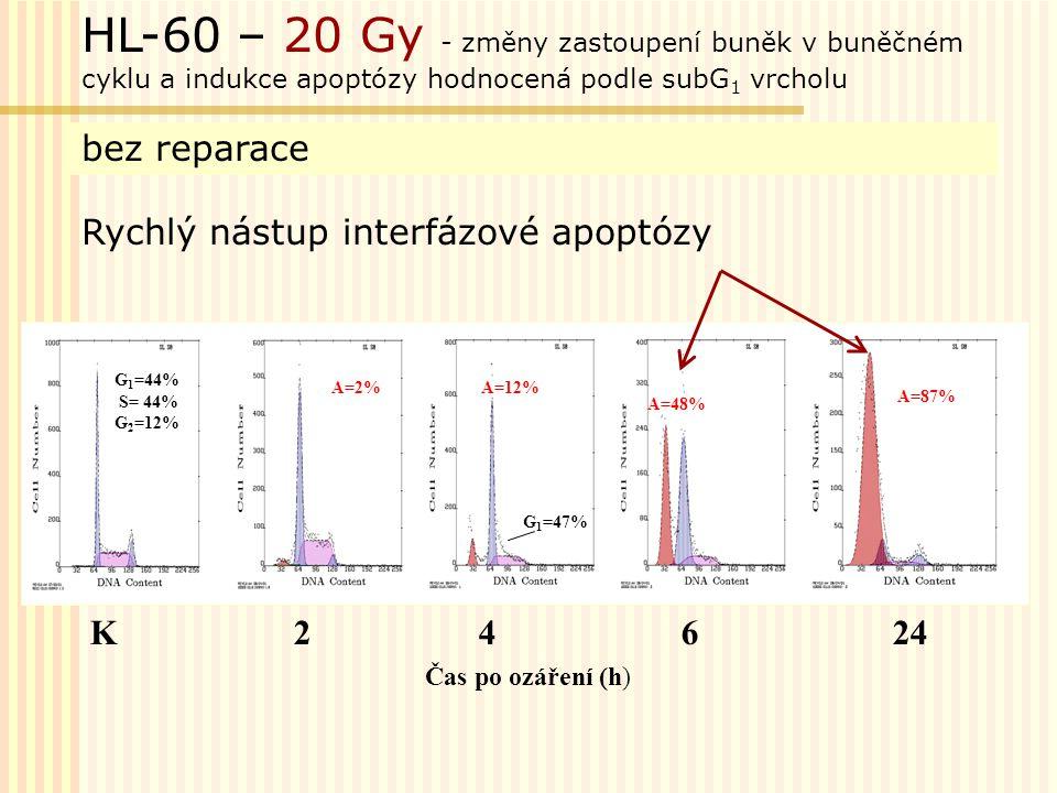 HL-60 – 20 Gy - změny zastoupení buněk v buněčném cyklu a indukce apoptózy hodnocená podle subG1 vrcholu