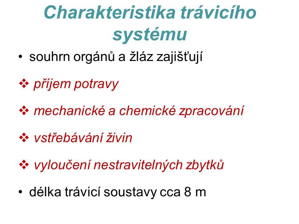 Charakteristika trávicího systému