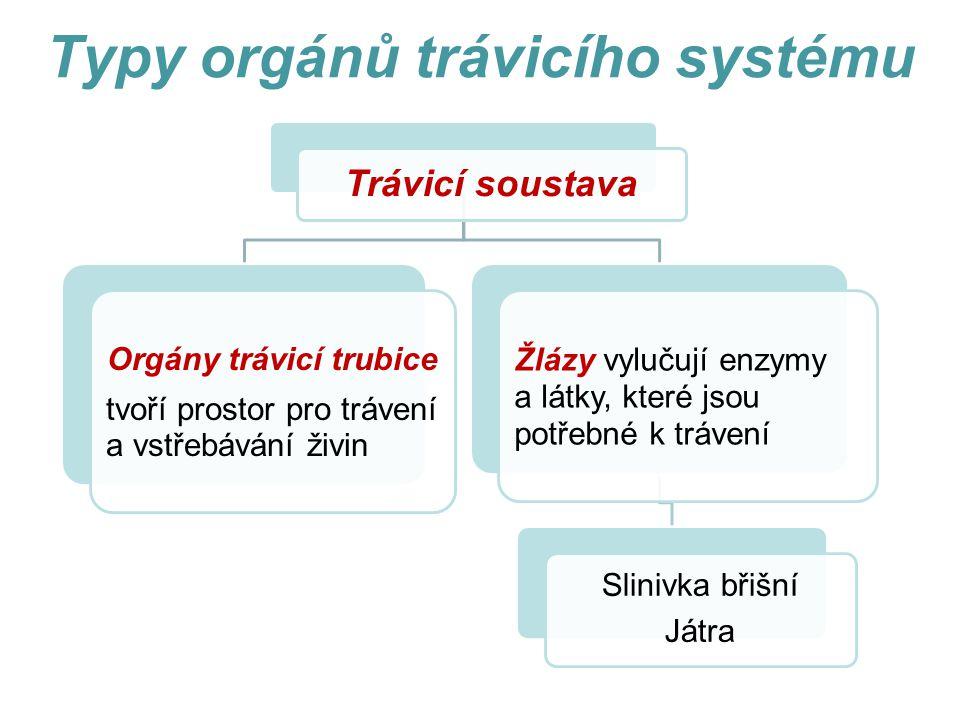 Typy orgánů trávicího systému