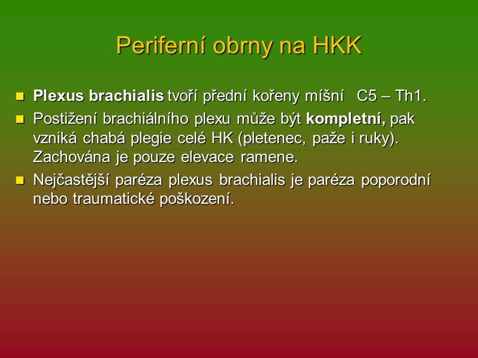 Periferní obrny na HKK Plexus brachialis tvoří přední kořeny míšní C5 – Th1.