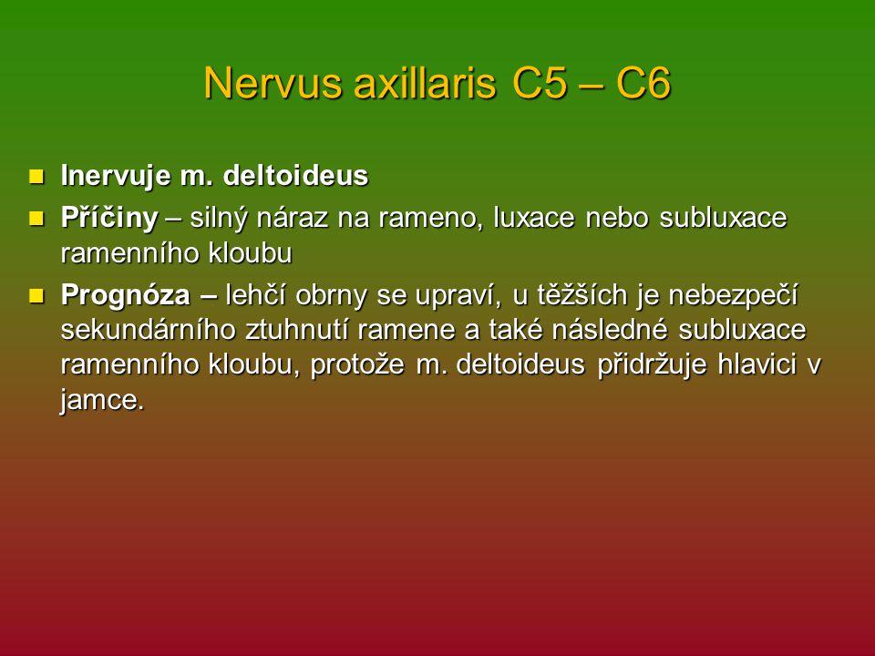 Nervus axillaris C5 – C6 Inervuje m. deltoideus