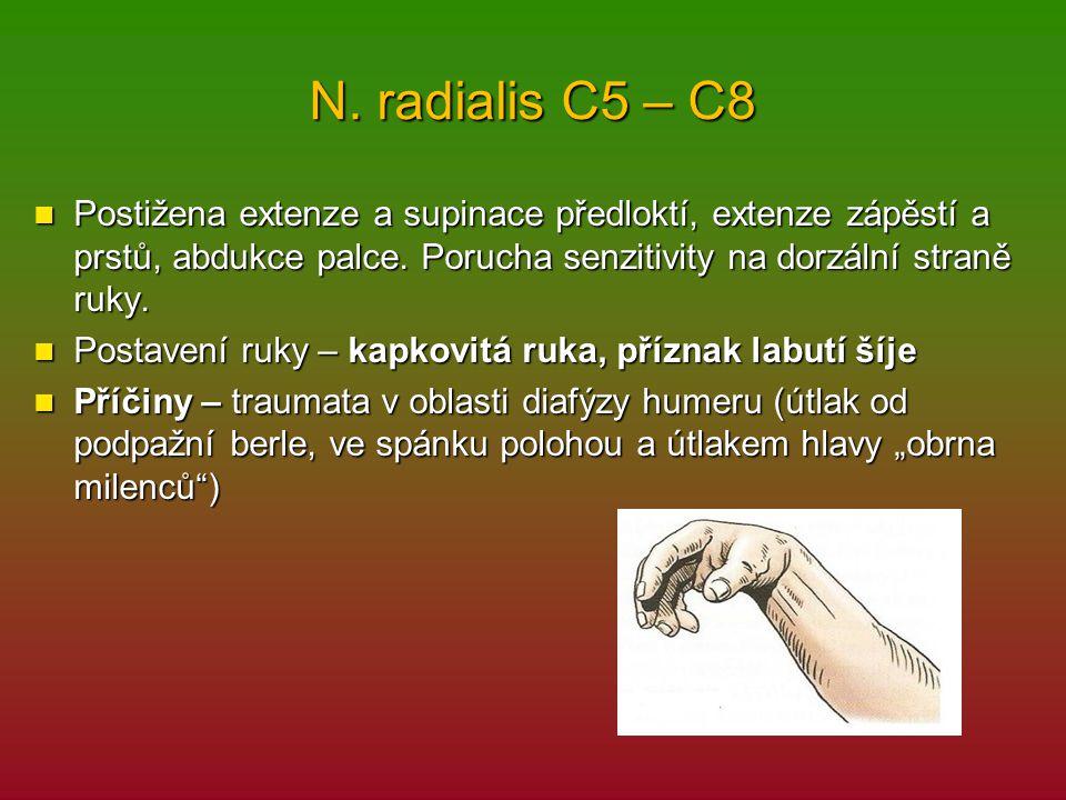 N. radialis C5 – C8 Postižena extenze a supinace předloktí, extenze zápěstí a prstů, abdukce palce. Porucha senzitivity na dorzální straně ruky.
