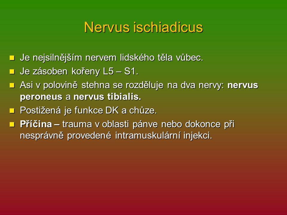Nervus ischiadicus Je nejsilnějším nervem lidského těla vůbec.