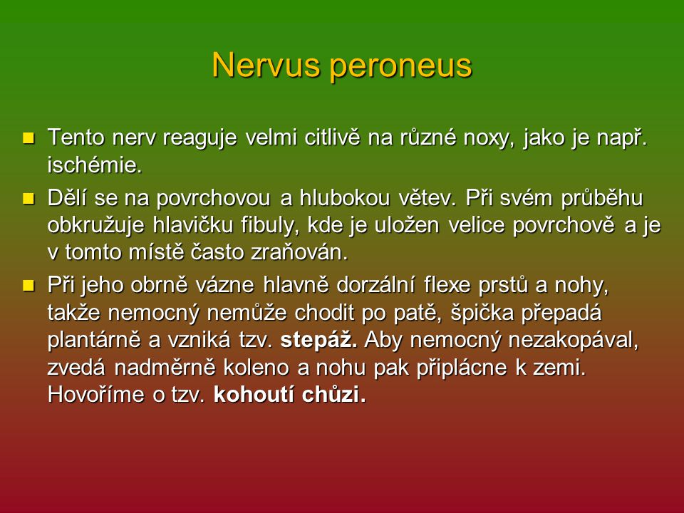 Nervus peroneus Tento nerv reaguje velmi citlivě na různé noxy, jako je např. ischémie.