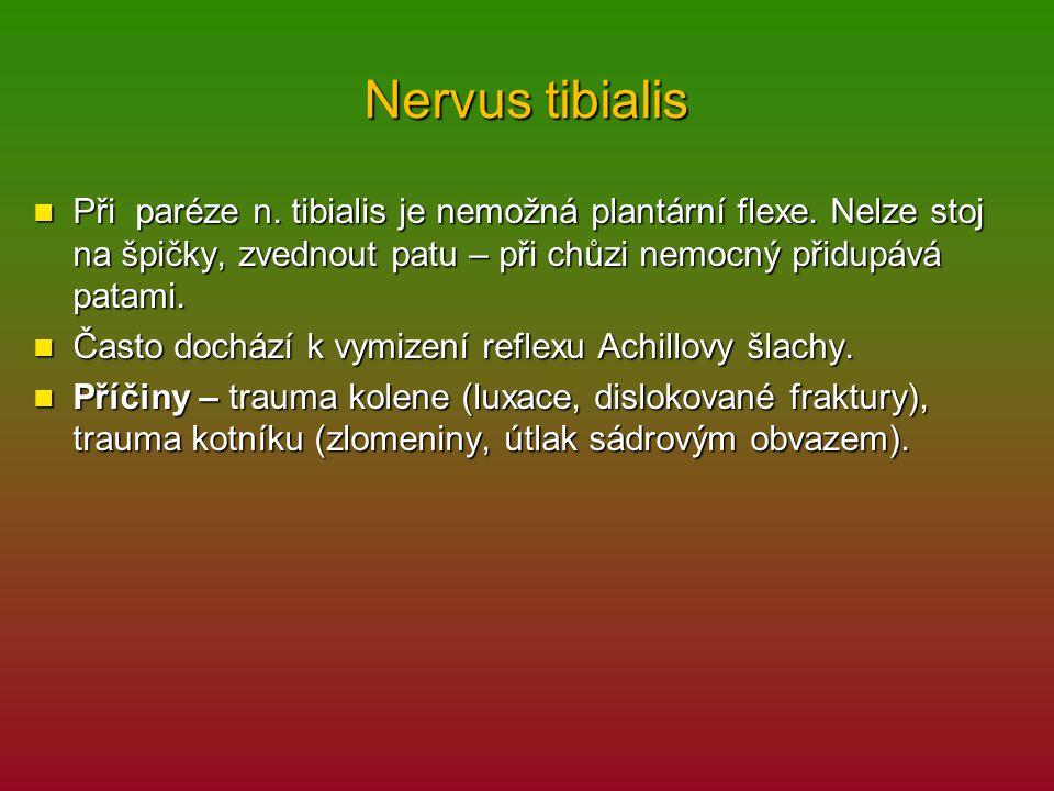 Nervus tibialis Při paréze n. tibialis je nemožná plantární flexe. Nelze stoj na špičky, zvednout patu – při chůzi nemocný přidupává patami.