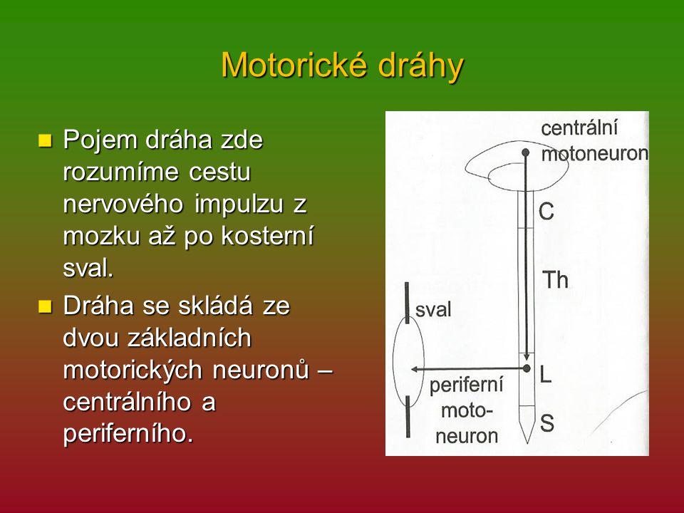Motorické dráhy Pojem dráha zde rozumíme cestu nervového impulzu z mozku až po kosterní sval.