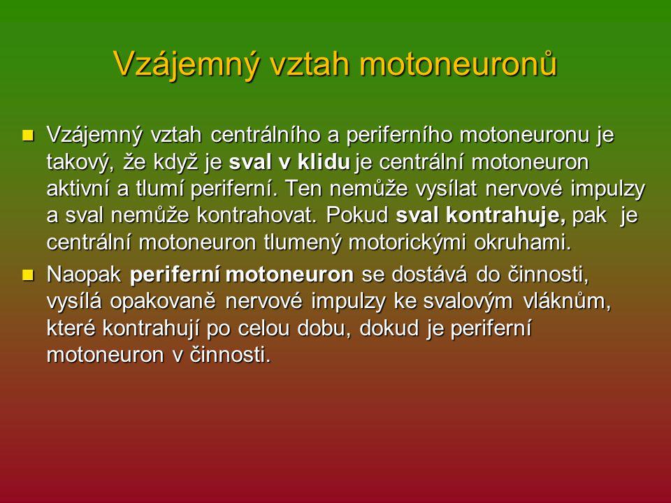 Vzájemný vztah motoneuronů