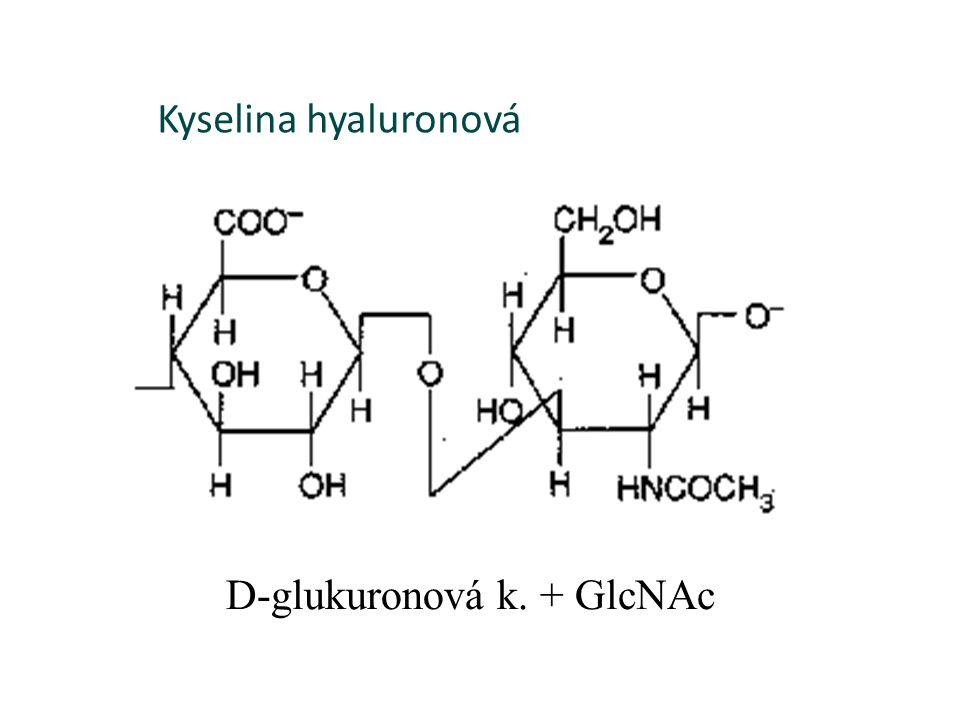 Kyselina hyaluronová D-glukuronová k. + GlcNAc