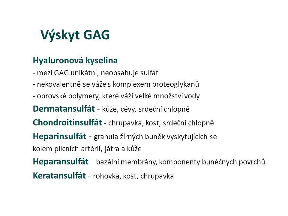 Výskyt GAG Hyaluronová kyselina