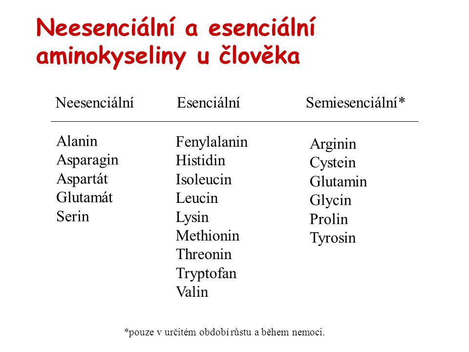 Neesenciální a esenciální aminokyseliny u člověka