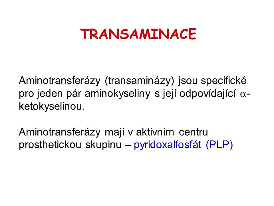 TRANSAMINACE Aminotransferázy (transaminázy) jsou specifické pro jeden pár aminokyseliny s její odpovídající a-ketokyselinou.