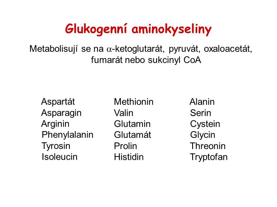 Glukogenní aminokyseliny