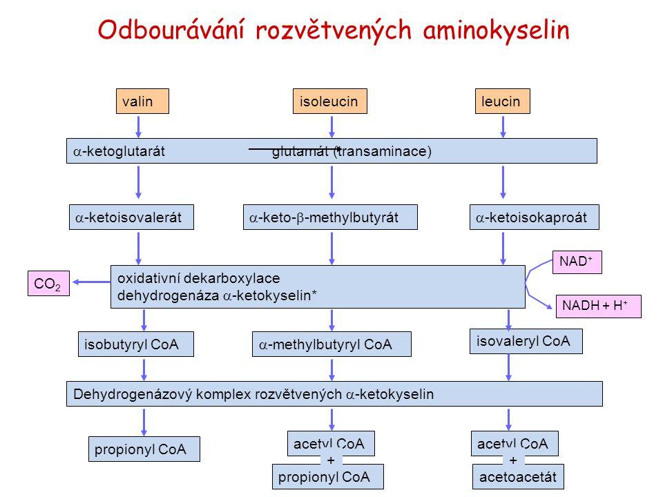 Odbourávání rozvětvených aminokyselin