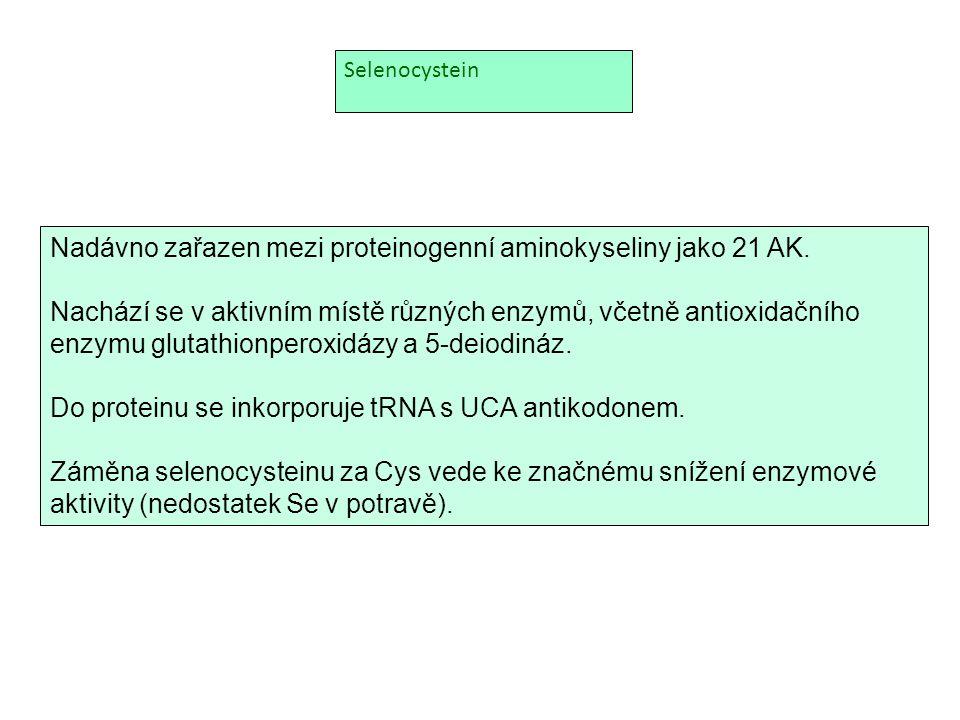 Nadávno zařazen mezi proteinogenní aminokyseliny jako 21 AK.