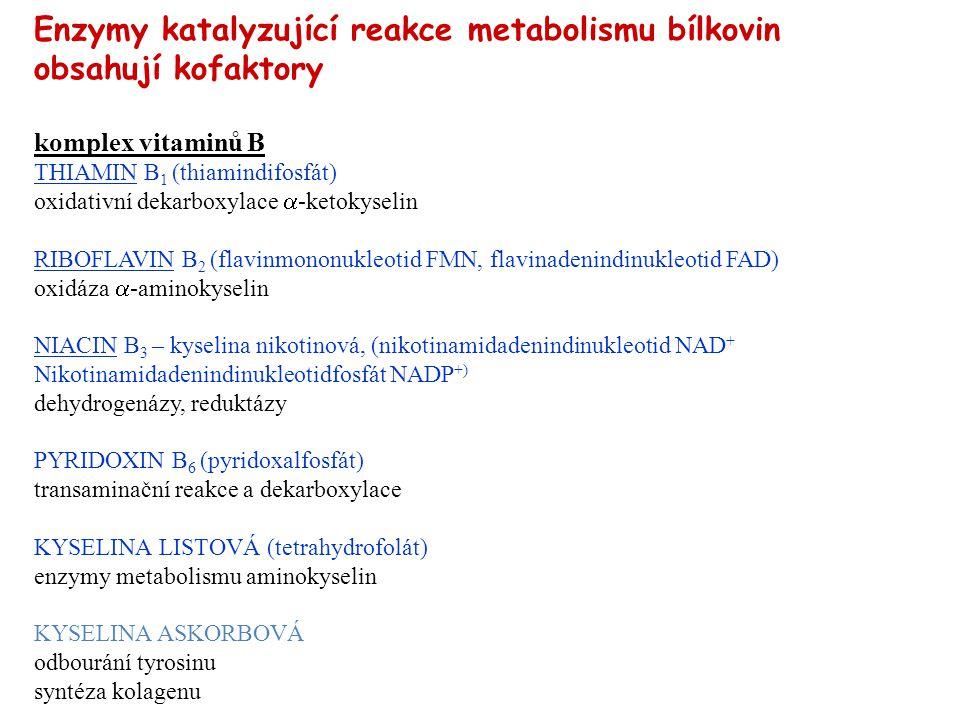 Enzymy katalyzující reakce metabolismu bílkovin obsahují kofaktory