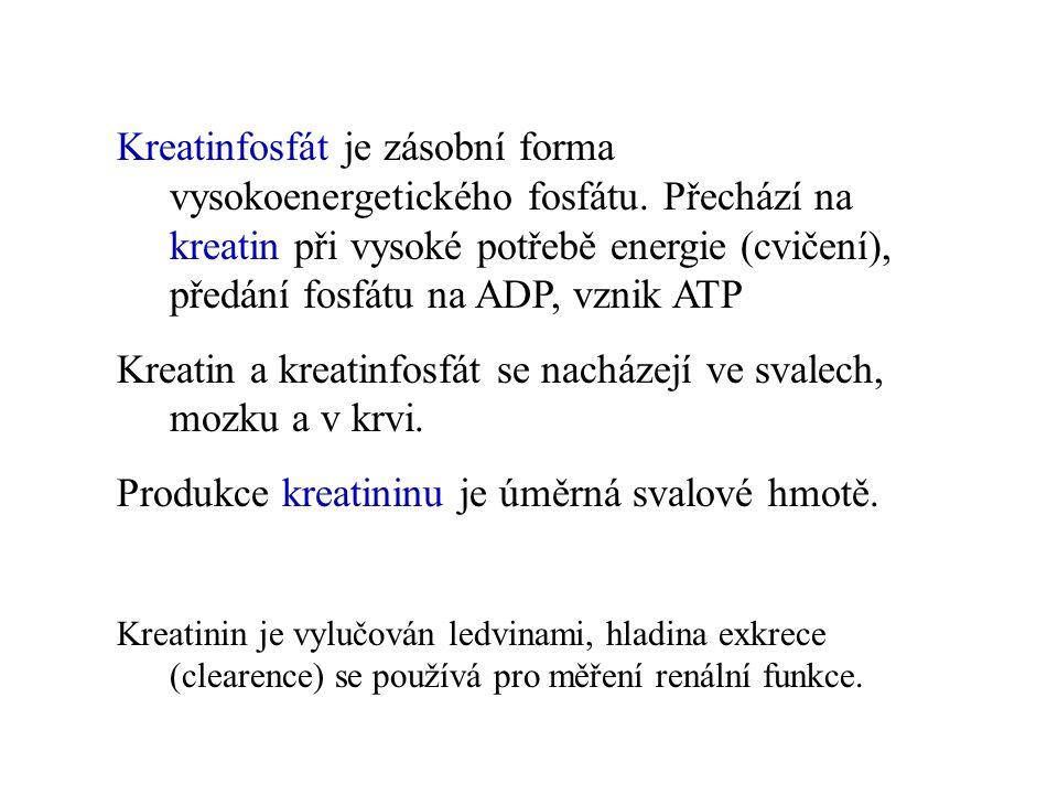 Kreatin a kreatinfosfát se nacházejí ve svalech, mozku a v krvi.