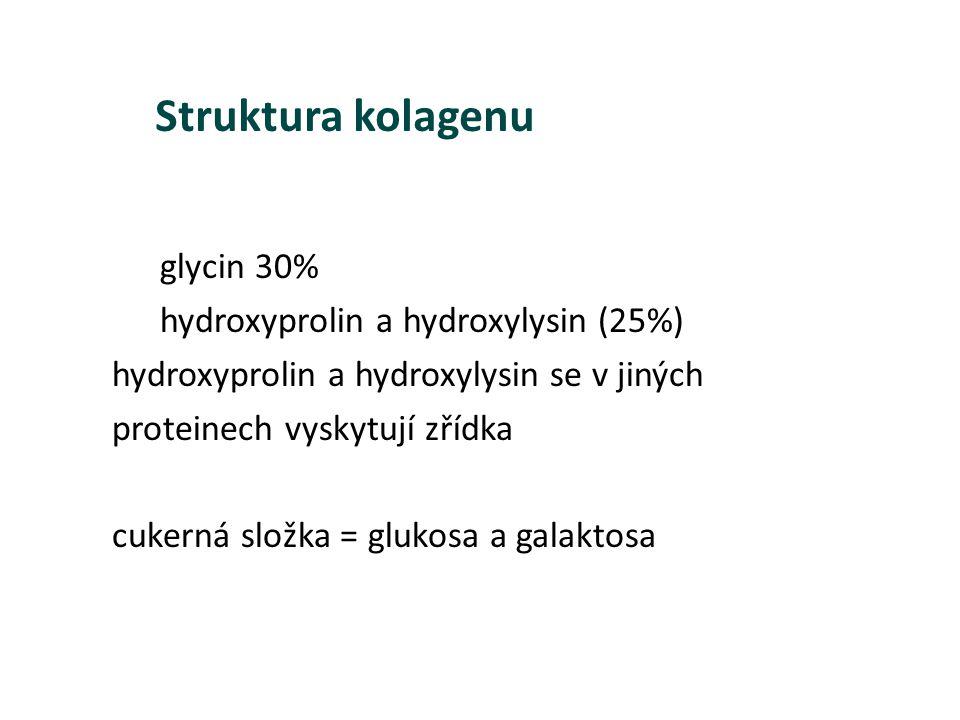Struktura kolagenu glycin 30% hydroxyprolin a hydroxylysin (25%)