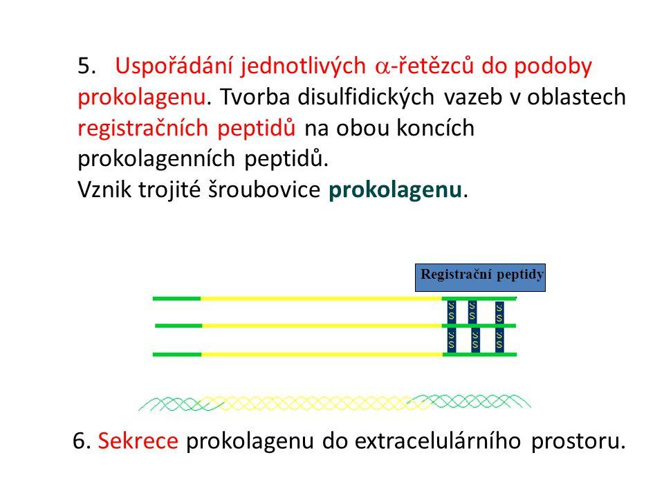 Vznik trojité šroubovice prokolagenu.