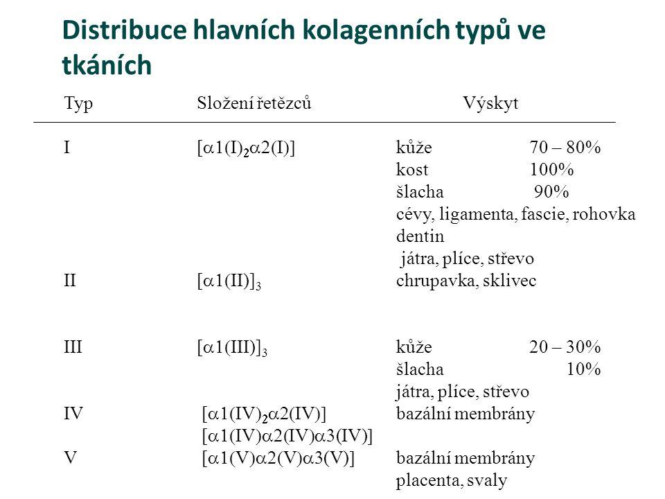 Distribuce hlavních kolagenních typů ve tkáních