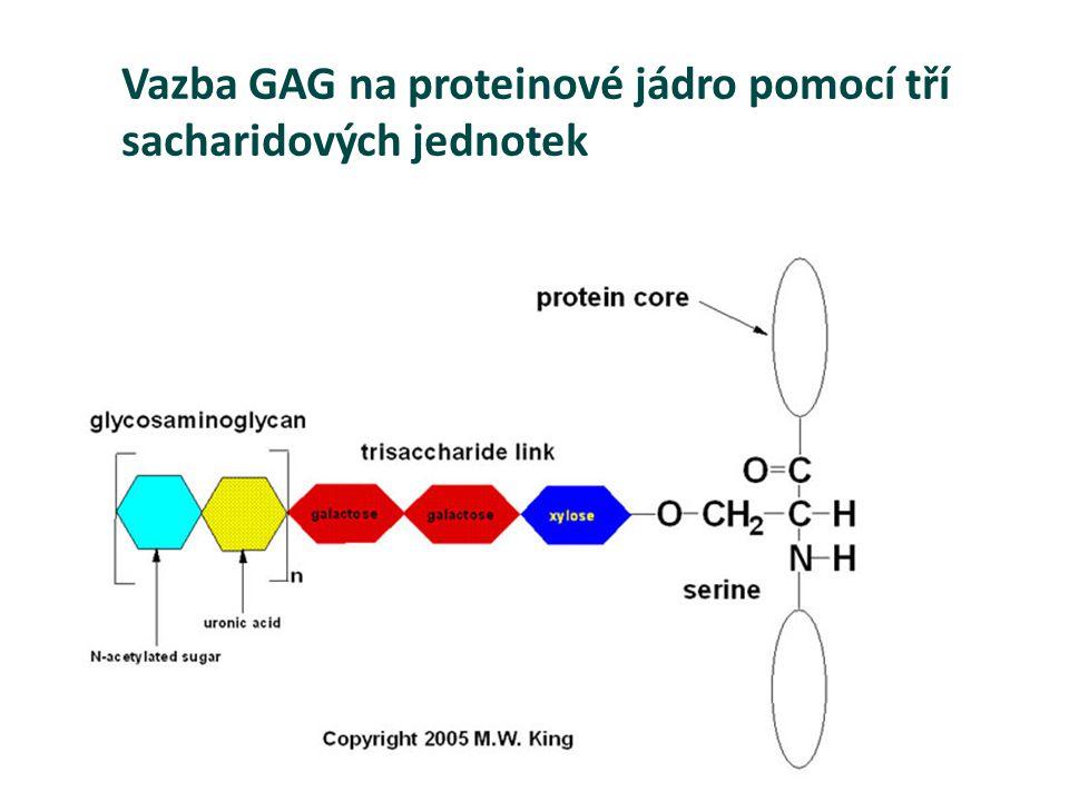 Vazba GAG na proteinové jádro pomocí tří sacharidových jednotek
