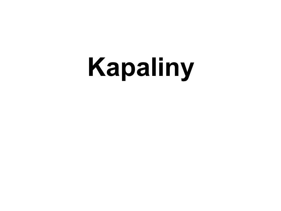 Kapaliny