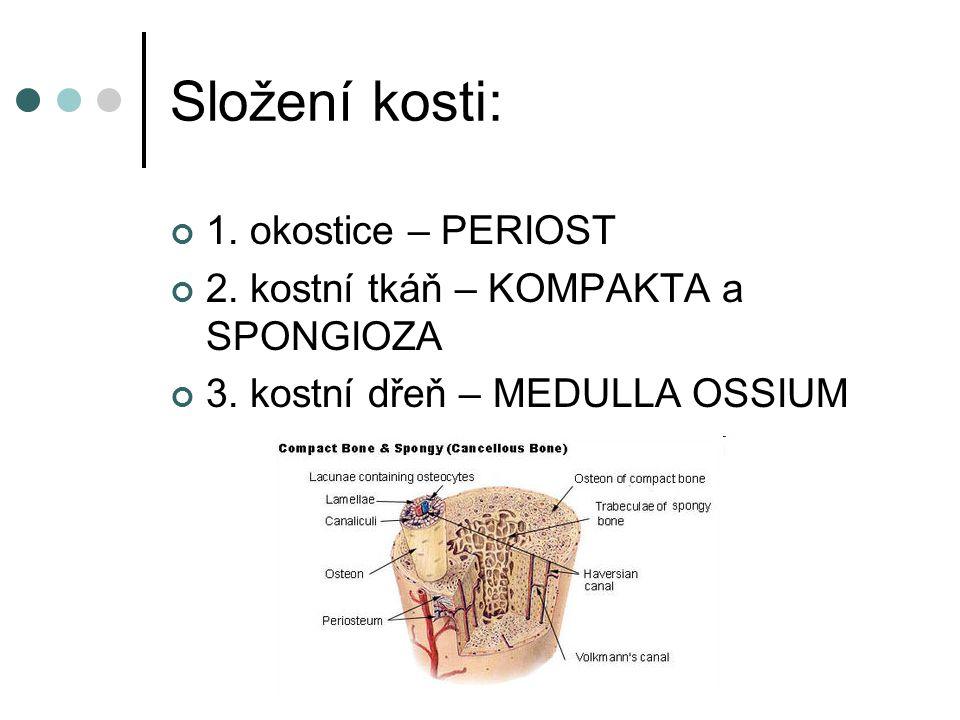 Složení kosti: 1. okostice – PERIOST