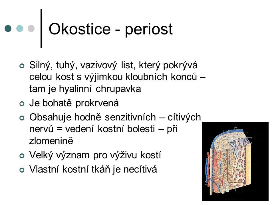 Okostice - periost Silný, tuhý, vazivový list, který pokrývá celou kost s výjimkou kloubních konců – tam je hyalinní chrupavka.