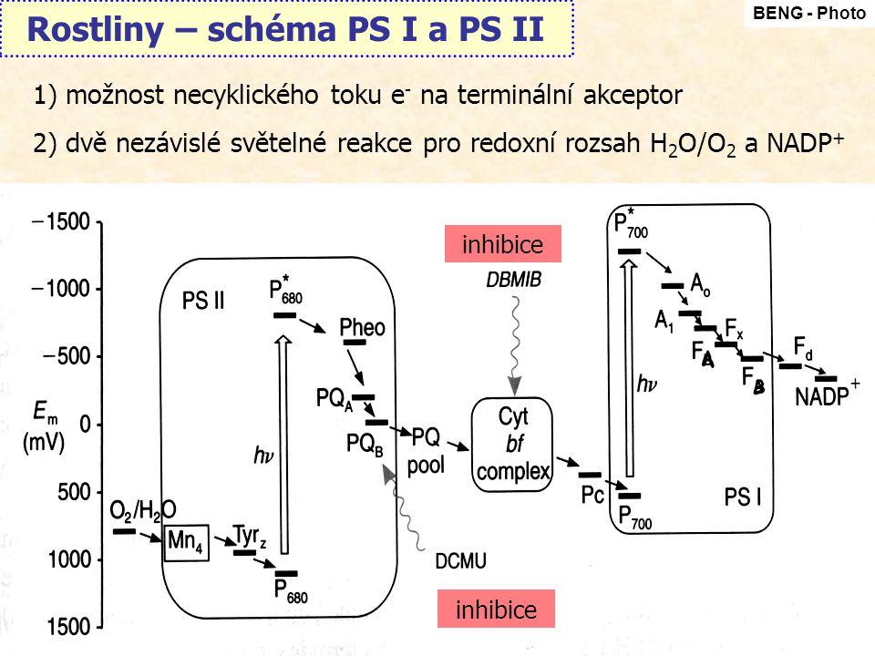 Rostliny – schéma PS I a PS II