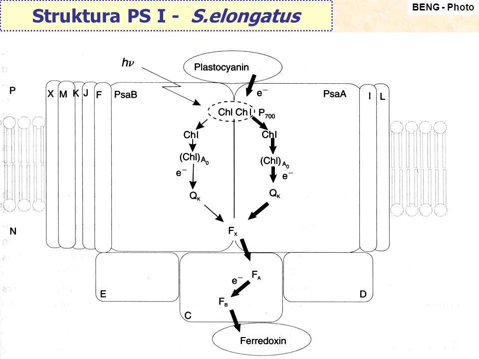 Struktura PS I - S.elongatus