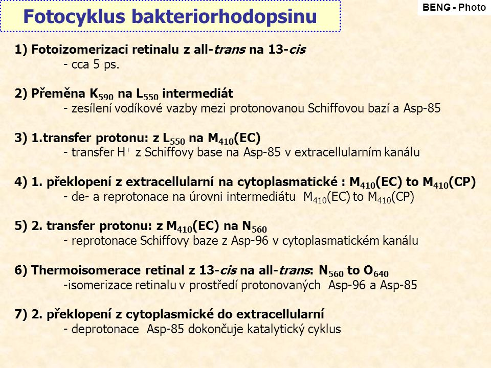 Fotocyklus bakteriorhodopsinu