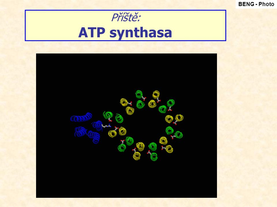 BENG - Photo Příště: ATP synthasa