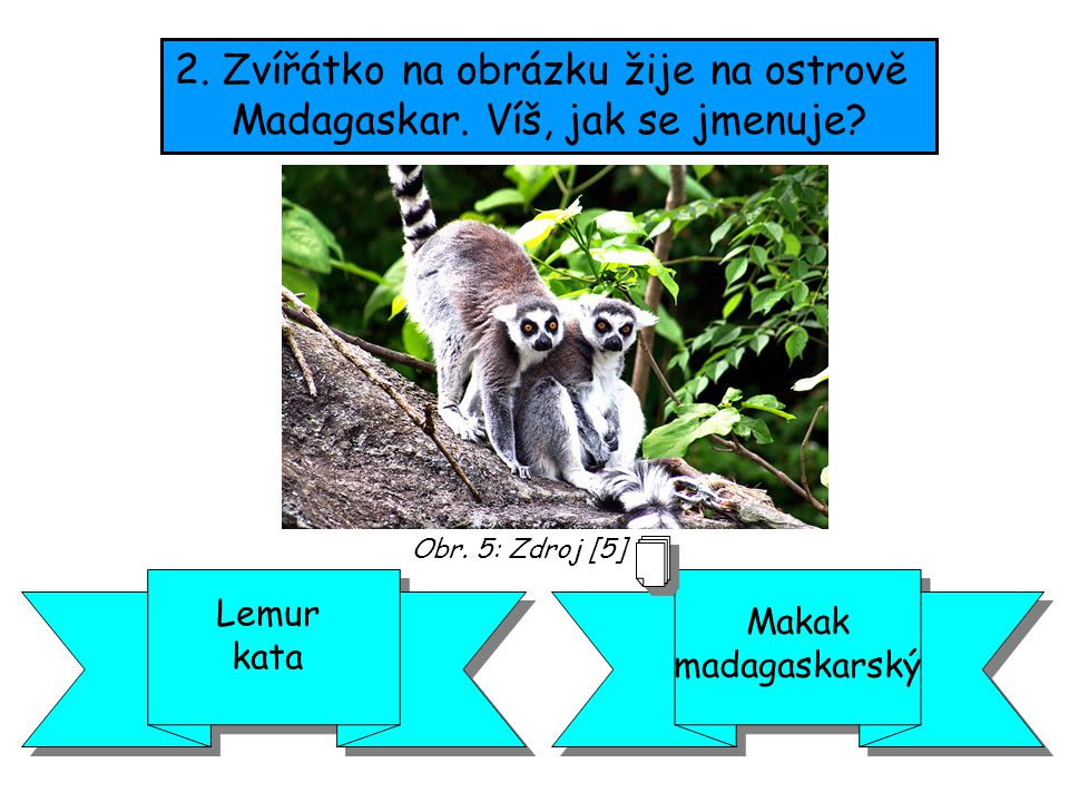 2. Zvířátko na obrázku žije na ostrově