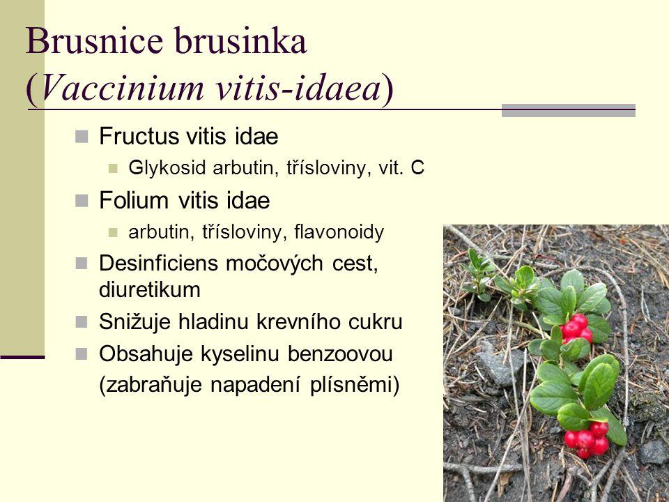 Brusnice brusinka (Vaccinium vitis-idaea)