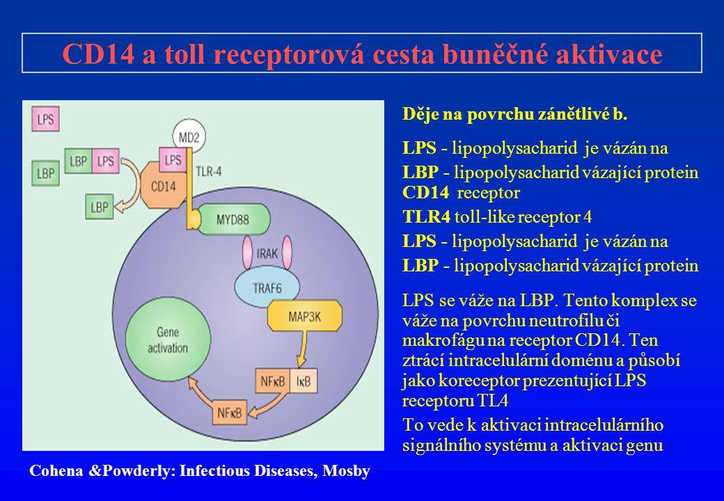 CD14 a toll receptorová cesta buněčné aktivace