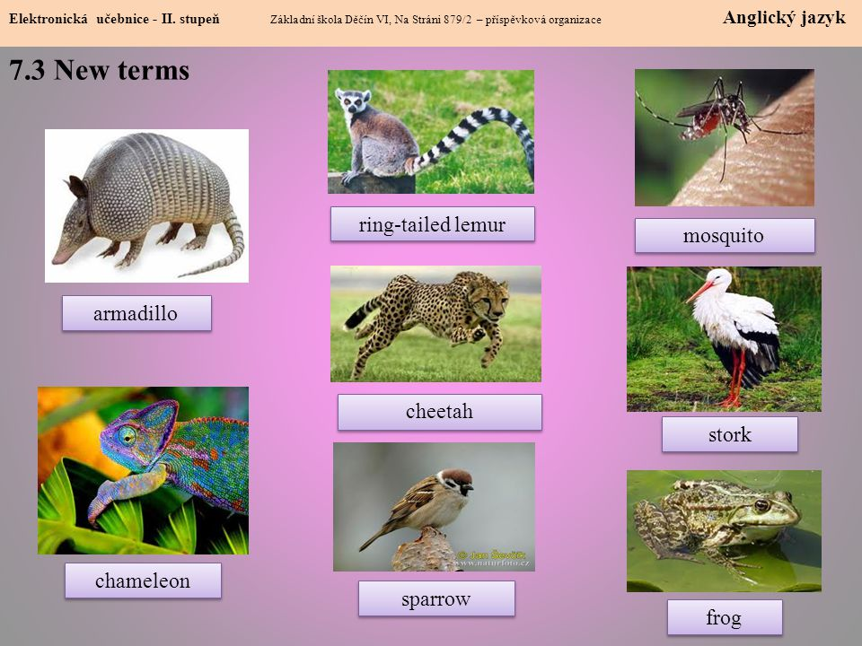 7.3 New terms ring-tailed lemur mosquito armadillo cheetah stork