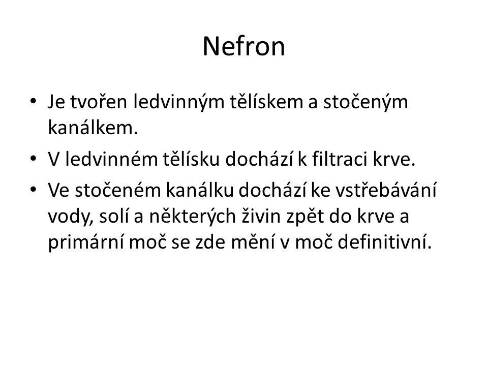 Nefron Je tvořen ledvinným tělískem a stočeným kanálkem.