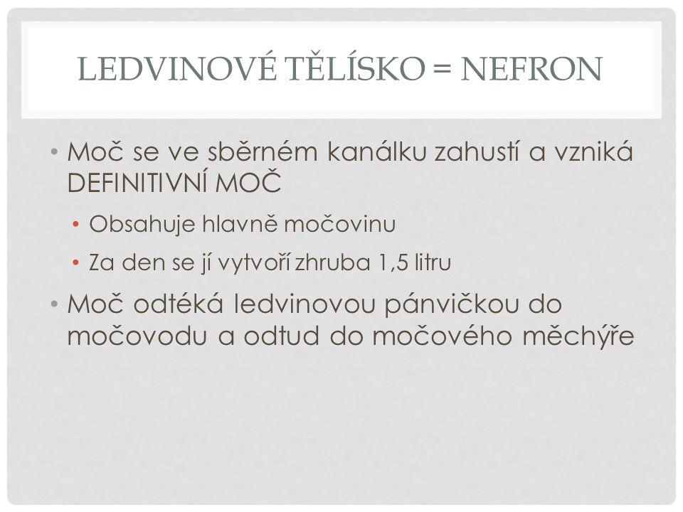 Ledvinové tělísko = nefron