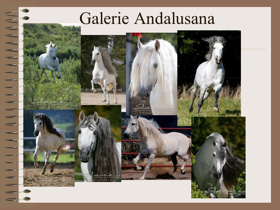 Galerie Andalusana